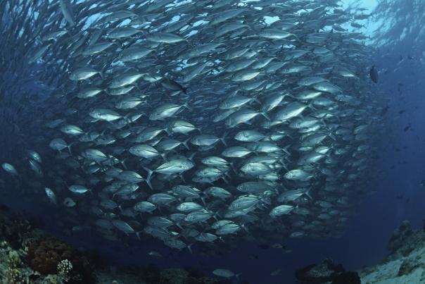 Fresh fish or farm raised fish