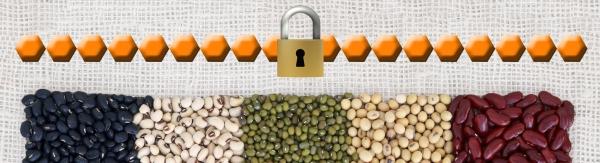 Secret-To-Nutrition-Fiber-Chain